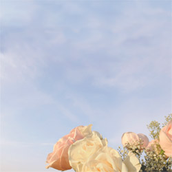 Blank CD jacket cover with pale roses and sky